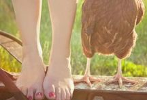 Chickens & Coop / Adore