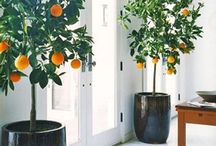 Exquisite Entryway / All about the energy.