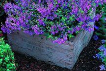 Gardening / by Diane Fees Krueger