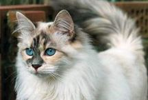 I can't believe I want a cat
