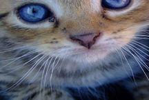 Kittens =^.^= / Kittens / by Diane V.L. Mertz