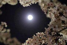 ⚫️ Good night