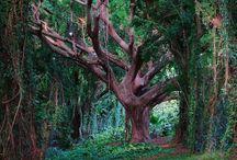 Trees that talk