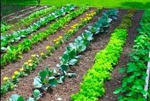 Garden someday