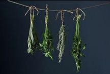Flourish / Gardening. Get it. / by Rebecca Haley-Park