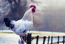 Fowl / by Rebecca Haley-Park