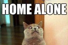 Funny Internet Memes / by Brianna Santos