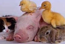 Love me some Animals <3 / LOVES, Cuties, RANDOM / by Marnie Bebej