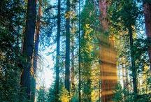 Nature Photos / by Sierra Club