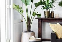 HOME  AESTHETIC / Home interiors inspiration showcasing the kind of home I'd love to live in.