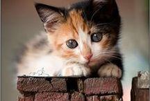 Love Pets / Dachs...cute!