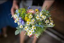 Plan a Garden: Cutting Flowers