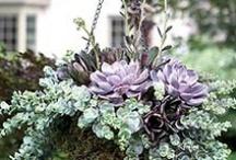 Gardening Ideas / by Treva Arrington