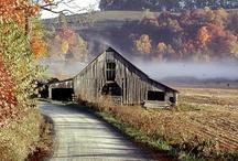 I Love Barns / by Shelia Coogler Muse