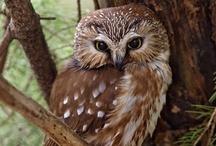 ❤ owls