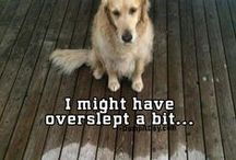 Funny Animal Sayings / by Red Bank Veterinary Hospital