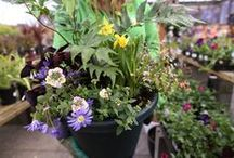 Container Gardens / container gardening