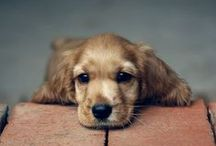 Dogs / Cute Pups :) / by Alexandra Bryant