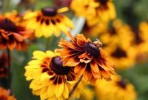 Fall Color / Plants for fall interest in the garden
