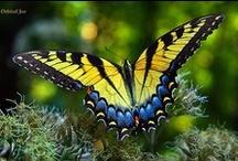 Caterpillars New Life / Caterpillars and Butterflies   / by Jina