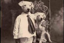 Vintage Animals / by Red Bank Veterinary Hospital