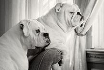 Dogs / by Red Bank Veterinary Hospital