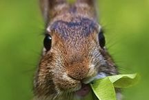 Rabbits & Hares / by Red Bank Veterinary Hospital