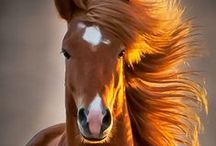 Horses / by Red Bank Veterinary Hospital