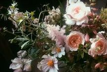 Beautiful Flowers / Pretty #flowers
