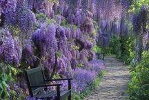 Garden / by Rachel Stankevich