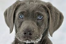 Fur Baby Love, Care & Tips /   / by ~Gabriellyn~