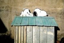 Snoopy / by Stacey Bolick
