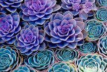Botanical / by Shiva One