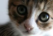 Cat lady / by Rachel {Apple Brides}