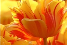 FLOWERS / by ✯Melissa Gambino McGee-Porter✯