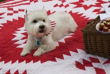 Westies and other doggie friends! / by Kathryn Greeley