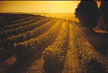 Cognac Country / All about Cognac, Saintes and the Charente Valley!