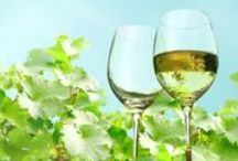 White Wines For Spring / The Best White Wines and White Wine Bottles to Drink This Spring! :) Whether you love Chardonnay, Pinot Grigio, Sauvignon Blanc, or Rose, you'll find all the best wines for the spring season here! / by Wine Library