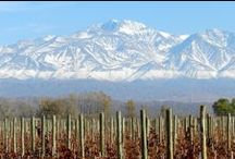 Wines from Argentina / Amazing wines from Argentina  / by Wine Library