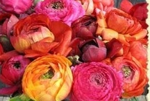 Flowers / by Eva Walters