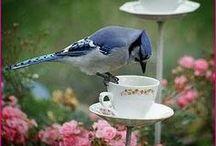 Garden Ideas / by Hummingbird Homestead