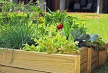 landscape & gardening / landscape and gardening