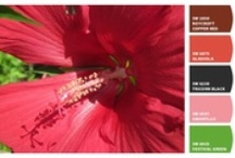 Color Selection Tools / Be inspired by color before picking up a brush. / by Sherwin-Williams