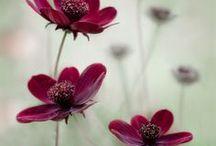 Flowers / by Hannah Krigarn