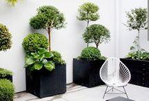 Ideas for the garden / by Michele de Souza Ribeiro