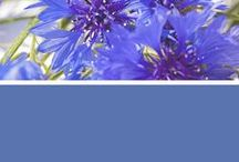 May Flowers / From bold hues to pretty pastels, get inspired by the many shades of spring flowers. / by Sherwin-Williams