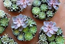 Beautifully succulent
