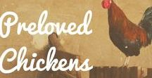 Chickens / Learn more about how to look after your feathered friends, as well as our favourite Preloved chicken blogs and adverts!