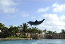 Family Fun in Paradise / From tiny tots, to tweens and teenagers, Nassau Paradise Island has a few tricks up its sleeve to keep everybody satisfied.  From a massive water-park playground to a zoo with marching flamingoes, Nassau Paradise Island is not short on fun for the whole family.