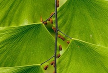 plants / by Peggie Wilcox